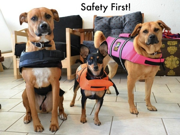 Cute dog picture safety first