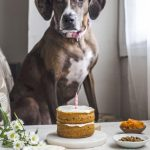 Vegan Pumpkin Dog Cake (for people too!) | thealmondeater.com